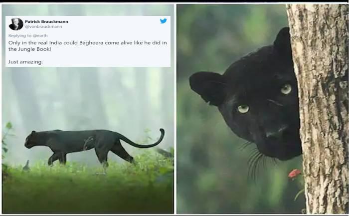 Black Panther Pics
