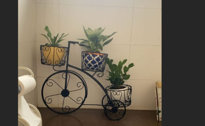 Taapsee's plants